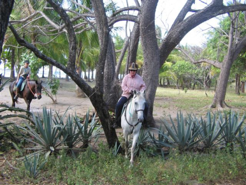Horseback rides in the Costa Rican country side. / Reitausflüge in Costa Rica im Hinterland.