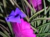 Blooming in the rainforest.  ||   Einzigartige Blüten im Regenwald.
