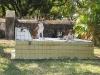 Costa Rican dogs at a temporary rest. / Nicht gleich die ewige Ruhe, aber auch costaricanische Hunde brauchen mal ne Pause.