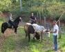 Meet oxcarts in the Guanacaste countryside. / Land und Leute in Costa Rica trifft frau am Besten zu Pferde.
