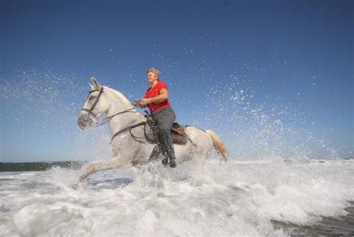 Horseback in Costa Rica: Canter in the surf. / Wellenreiten vom Feinsten in Costa Rica.