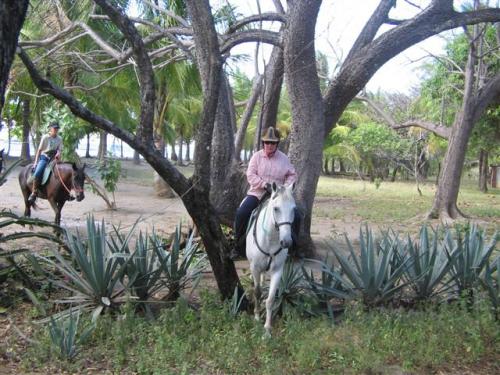 Horseback rides in the Costa Rican country side. / Reitausflüge in Costa Rica im Hinterland.