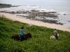 Horseback trails along the coast in Guanacaste. / Wanderreiten an der Küste - ein Traum wird wahr.