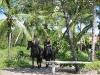 Trailriding in awesome landscape.  ||    Westernreiten in beeindruckend tropischer Umgebung.